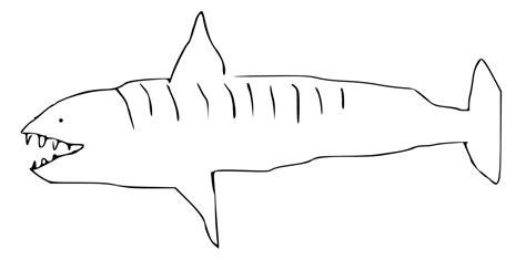 filetiger shark drawingsvg wikimedia commons