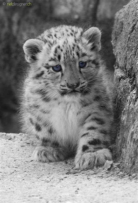 ~~blue eyes dont lie by Daniel Münger~~ | Baby animals