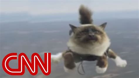 skydiving cats  uproar youtube