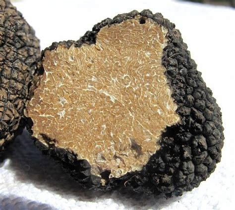cuisiner truffe conserver et cuisiner la truffe guide astuces