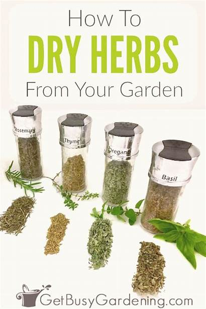 Herbs Drying Makalenin Kaynağı Mint Rack Fresh