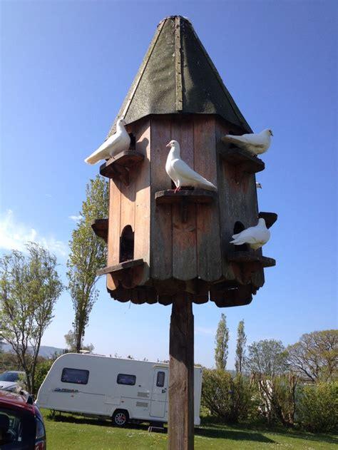 images  dovecote  pinterest gardens bespoke  birds