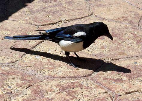 our nature colorado birds