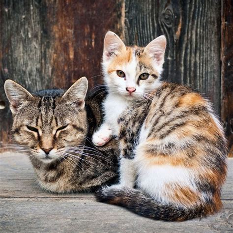 stray cat trap 1000 images about feral cat tnr resources on pinterest