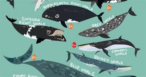 green humour baleen whales