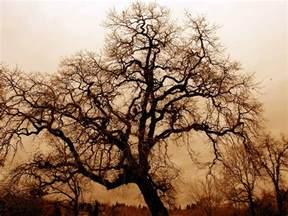 file bare oak tree jpg
