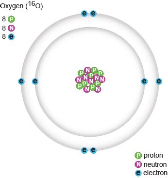 Number Of Protons In Oxygen by Biology Protons Neutrons And Electrons Shmoop Biology