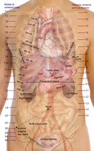 How Do You Know If You Have Gallstones   Healthhype.com