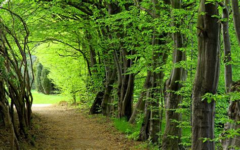 Forêt Hd Fonds D'écran Télécharger