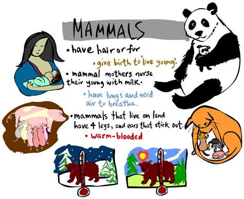 Mammals goodridgebiopatrick