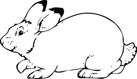 disegni da fare a matita semplici disegni di cani a matita semplici playingwithfirekitchen