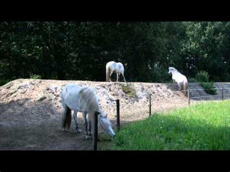 track horses living  paddock paradise