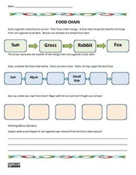 1000 images about food chains food webs on