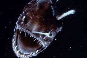 Angler fish - ABC News (Australian Broadcasting Corporation)