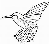 Coloring Hummingbird Bird Drawing Drawings Printable Huevos Strawberry Doghousemusic sketch template