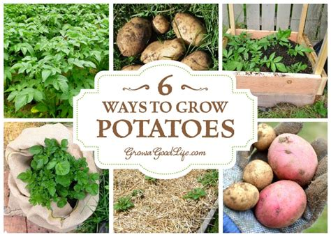 how to potatoes from garden 6 ways to grow potatoes
