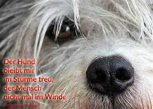 Emotionale Bilder Mit Sprüchen : homepage hund hundebilder mit spr chen hundespr che ~ Eleganceandgraceweddings.com Haus und Dekorationen