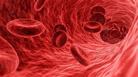 Scientists may have discovered way to regenerate blood vessels