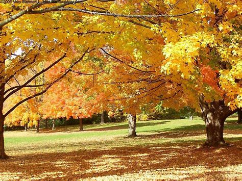 Android Hd Autumn Wallpapers by Autumn Day In The Park Wallpapers For Android Hd Nature