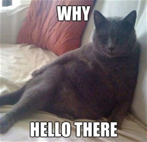 Hello Meme Funny - hello meme cat funny memes pinterest meme