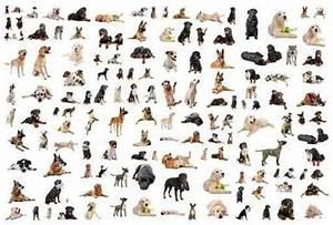Toy Dog Breeds Chart Hvgj - Litle Pups