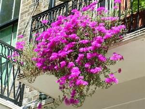 Balkonpflanzen Hängend Pflegeleicht : h ngende balkonpflanzen f r pr chtige outdoor r ume ~ Lizthompson.info Haus und Dekorationen