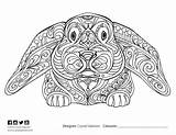 Coloring Adult Sea1 Scontent Fbcdn Xx Colouring sketch template