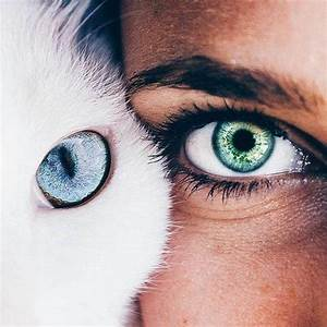 Cat Eyes Human | www.pixshark.com - Images Galleries With ...