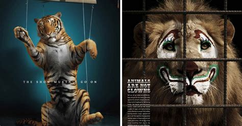 powerful animal ad campaigns  show   society