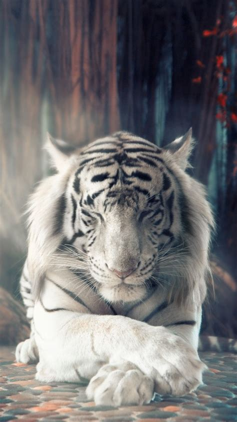 wallpaper white tiger forest autumn sunlight surreal