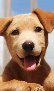 Animals Wallpapers iPhone : Animals wallpaper iPhone (With ...