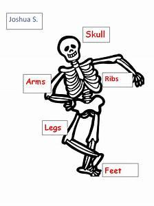 Label The Skeleton Bones