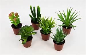 Künstliche Pflanzen Kaufen : 6er set mini sukkulenten 10cm bis 14cm dp kunstpflanzen k nstliche pflanzen ebay ~ Frokenaadalensverden.com Haus und Dekorationen