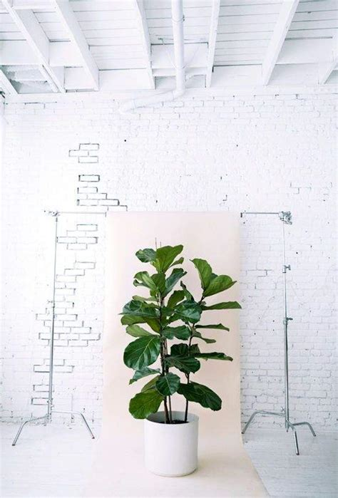 quelle plante pour salle de bain quelles plantes pour ma salle de bains