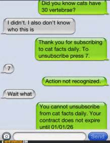 cat facts prank laughter is the closest distance between two