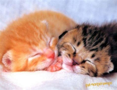 katzen transportbox für 2 katzen katzen 2 katzen schlafen die besten 100 bilder in