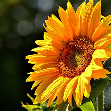 uv rays vision san leandro ca flores optometry