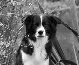 Dekokissen Schwarz Weiß : schwarz wei in schwarz wei foto bild tiere haustiere hunde bilder auf fotocommunity ~ Frokenaadalensverden.com Haus und Dekorationen