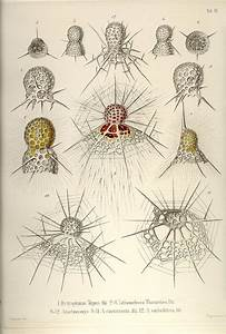 227 Best Images About Ernst Haeckel On Pinterest