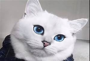 The Most Beautiful Cat in the World? | STAR 102.5