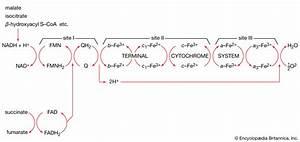 Hydrogenated Nad