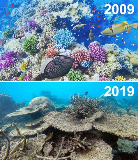 year challenge isnt funny     nature