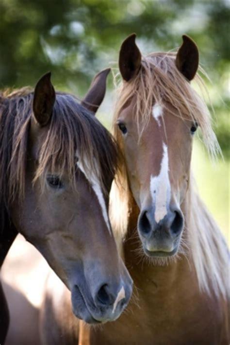 tipps zur fuetterung und haltung bei pferden mit sommerekzem