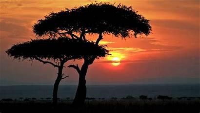 Sunset Spotlight Mara Windows Kenya Africa Maasai