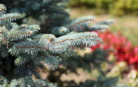 alan anderson christmas trees grow your own tree alan titchmarsh on what to plant and where to plant it