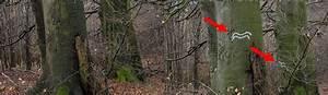 Hammer Porta Westfalica : wundersame biotopbaumvermehrung in porta westfalica w lder in deutschlandw lder in deutschland ~ Buech-reservation.com Haus und Dekorationen