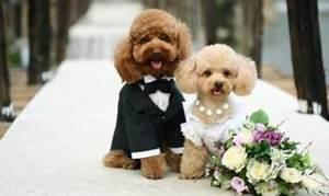 귀여운 강아지 커플의 결혼 사진. - 애완동물 - 인포피파