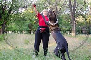 K9 ball with rope activity dog toy for great dane tt1 for Great dane dog supplies