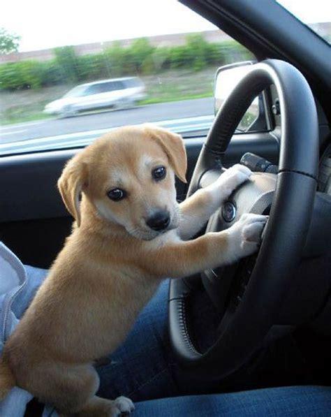 Super Cute Puppies