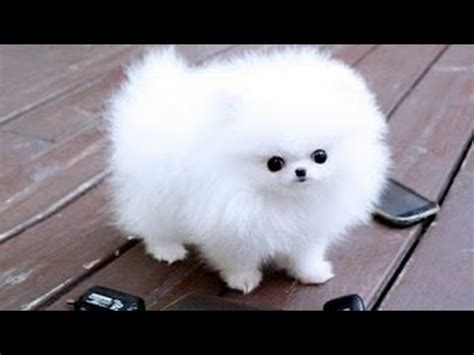 Cutest Dogs Ever Youtube